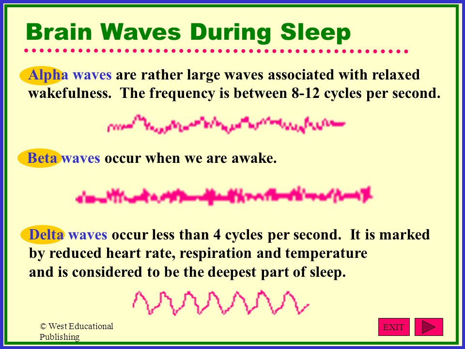 Brain Waves During Sleep