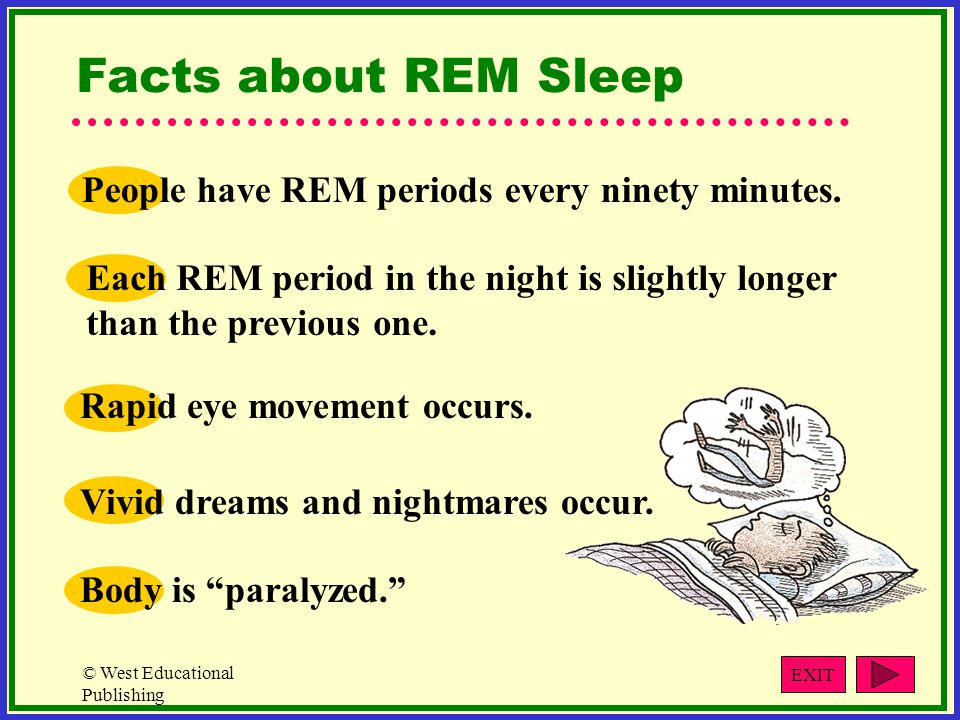 Facts about REM Sleep People have REM periods every ninety minutes.