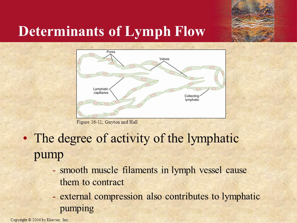 Determinants of Lymph Flow