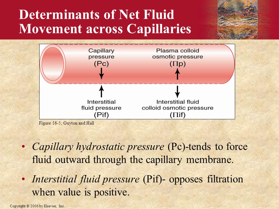Determinants of Net Fluid Movement across Capillaries