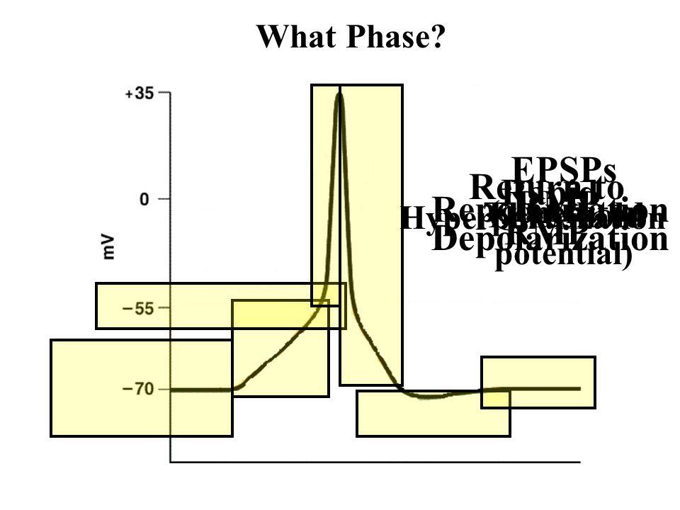 EPSPs (generator potential)