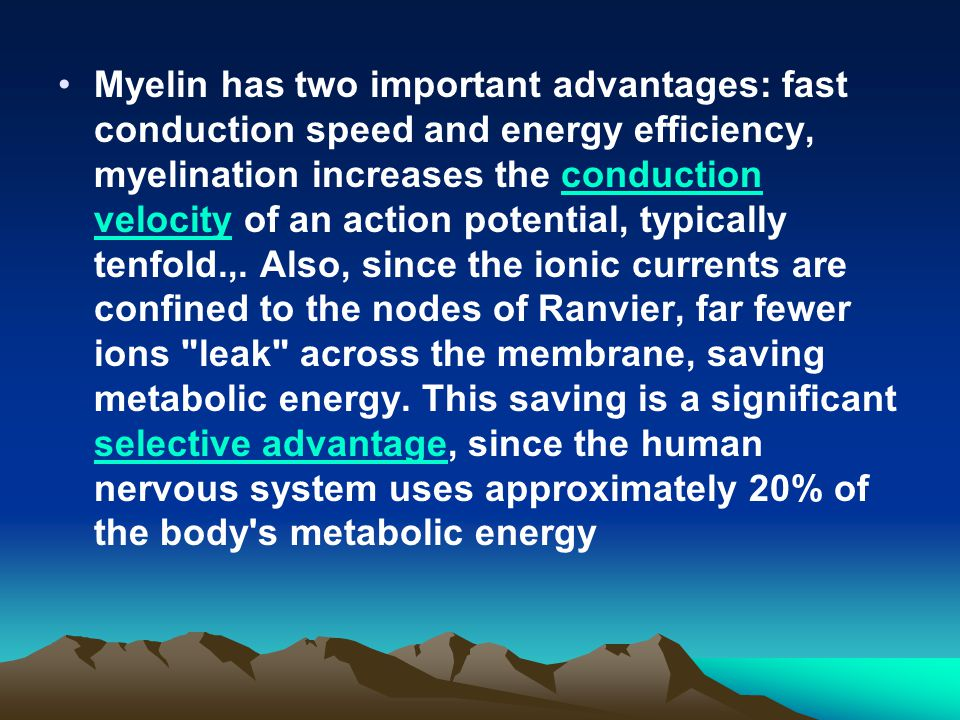 Myelin has two important advantages: fast conduction speed and energy efficiency, myelination increases the conduction velocity of an action potential, typically tenfold.,.