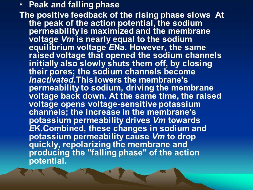 Peak and falling phase
