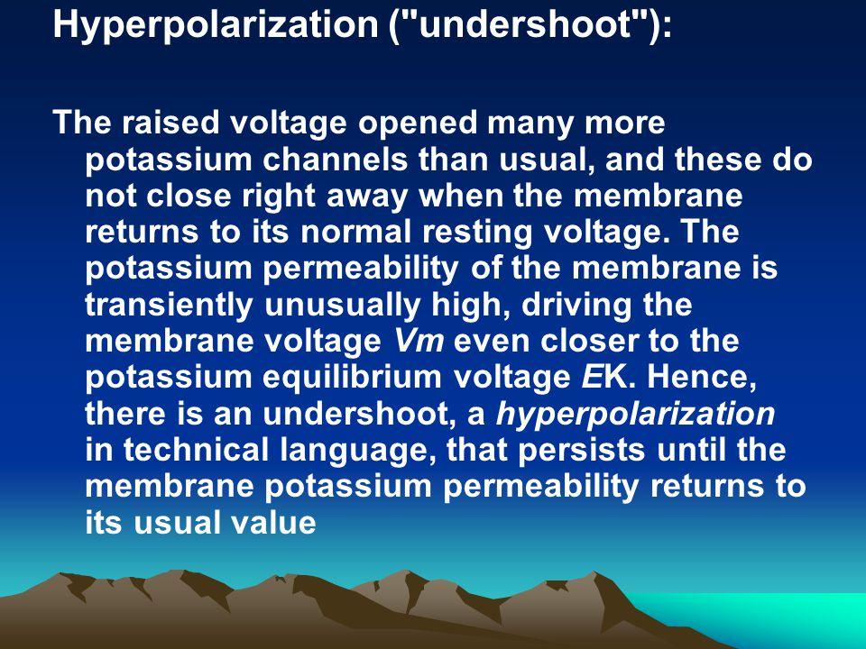 Hyperpolarization ( undershoot ):