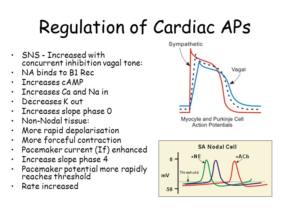 Regulation of Cardiac APs
