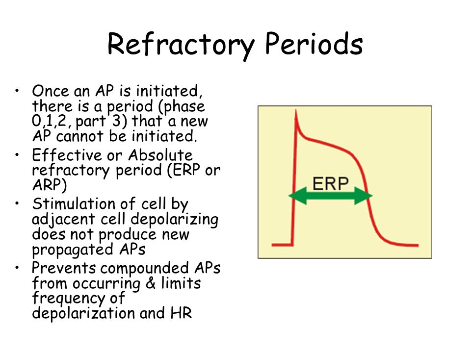 Refractory Periods Once an AP is initiated, there is a period (phase 0,1,2, part 3) that a new AP cannot be initiated.