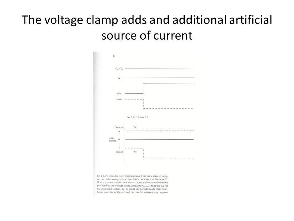The voltage clamp adds and additional artificial source of current