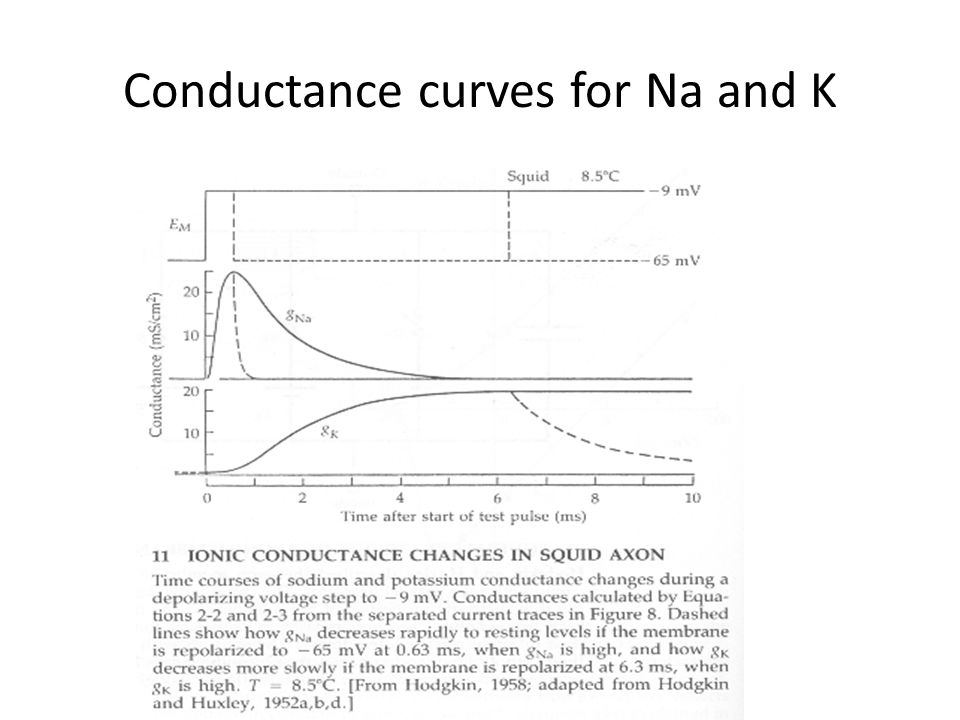 Conductance curves for Na and K