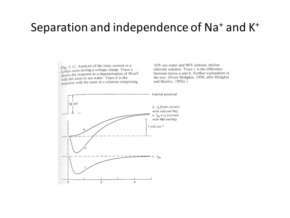 Separation and independence of Na+ and K+