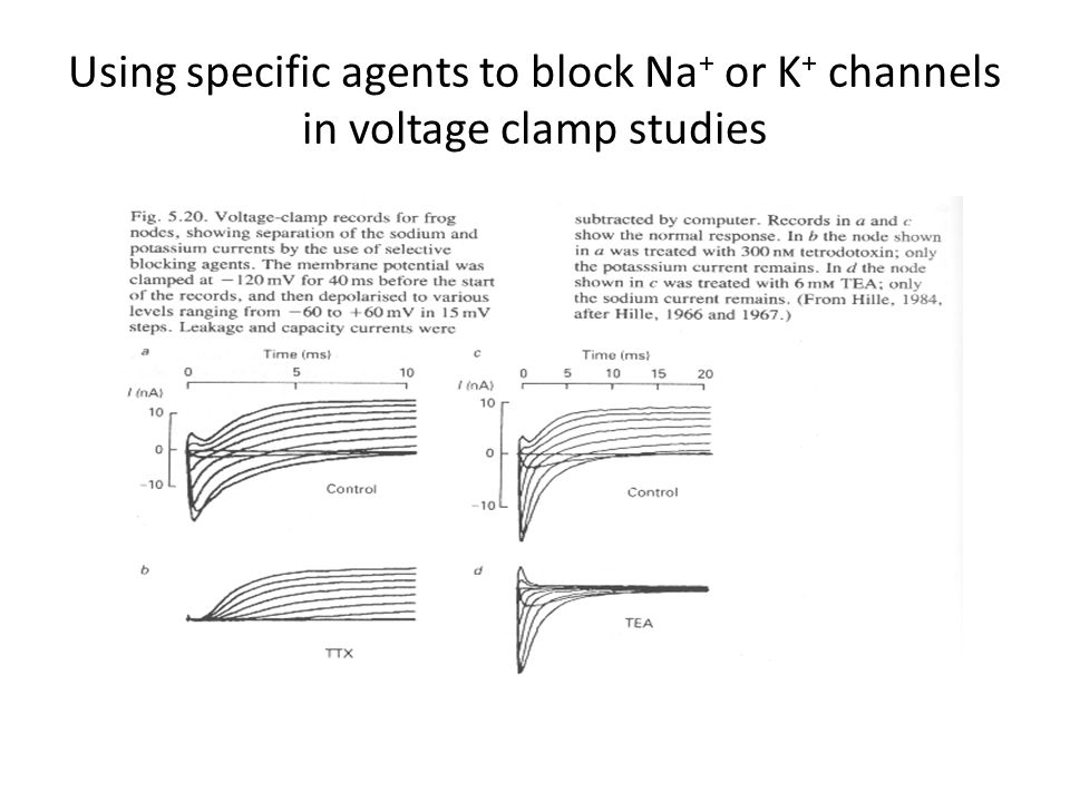 Using specific agents to block Na+ or K+ channels in voltage clamp studies