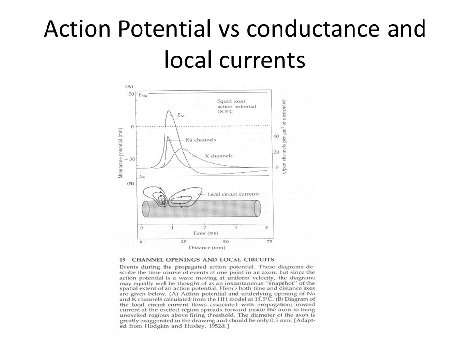 Action Potential vs conductance and local currents