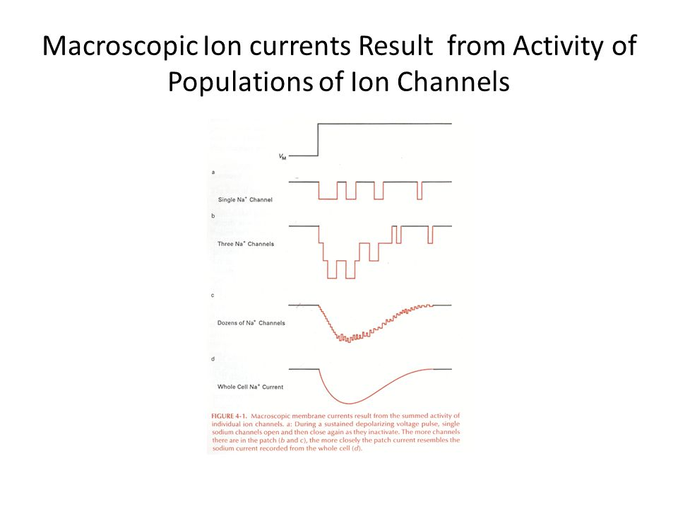 Macroscopic Ion currents Result from Activity of Populations of Ion Channels