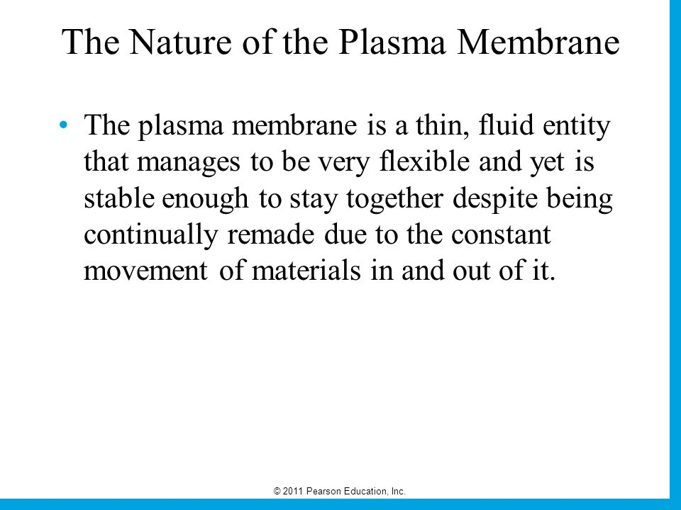 The Nature of the Plasma Membrane