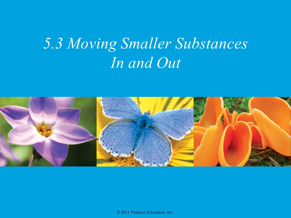 5.3 Moving Smaller Substances In and Out