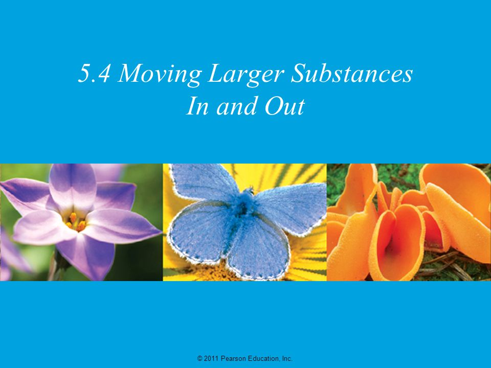 5.4 Moving Larger Substances In and Out