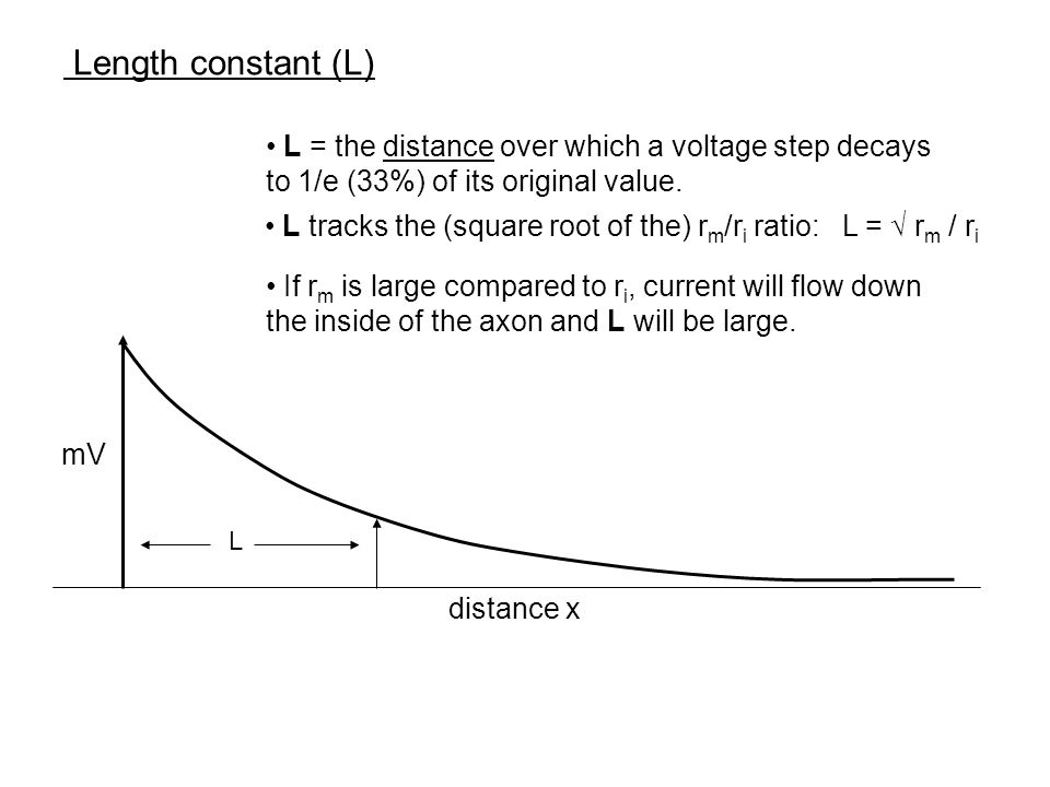 Length constant (L) L = the distance over which a voltage step decays to 1/e (33%) of its original value.