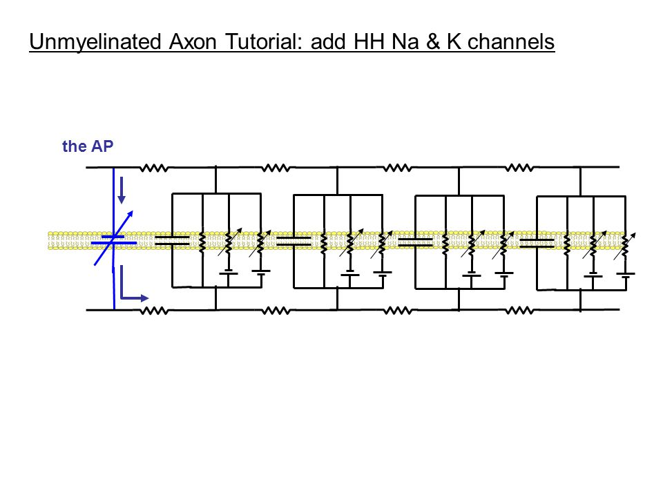 Unmyelinated Axon Tutorial: add HH Na & K channels