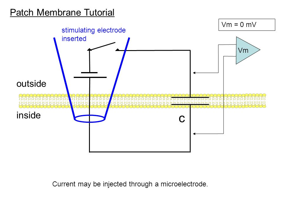 c Patch Membrane Tutorial outside inside Vm = 0 mV