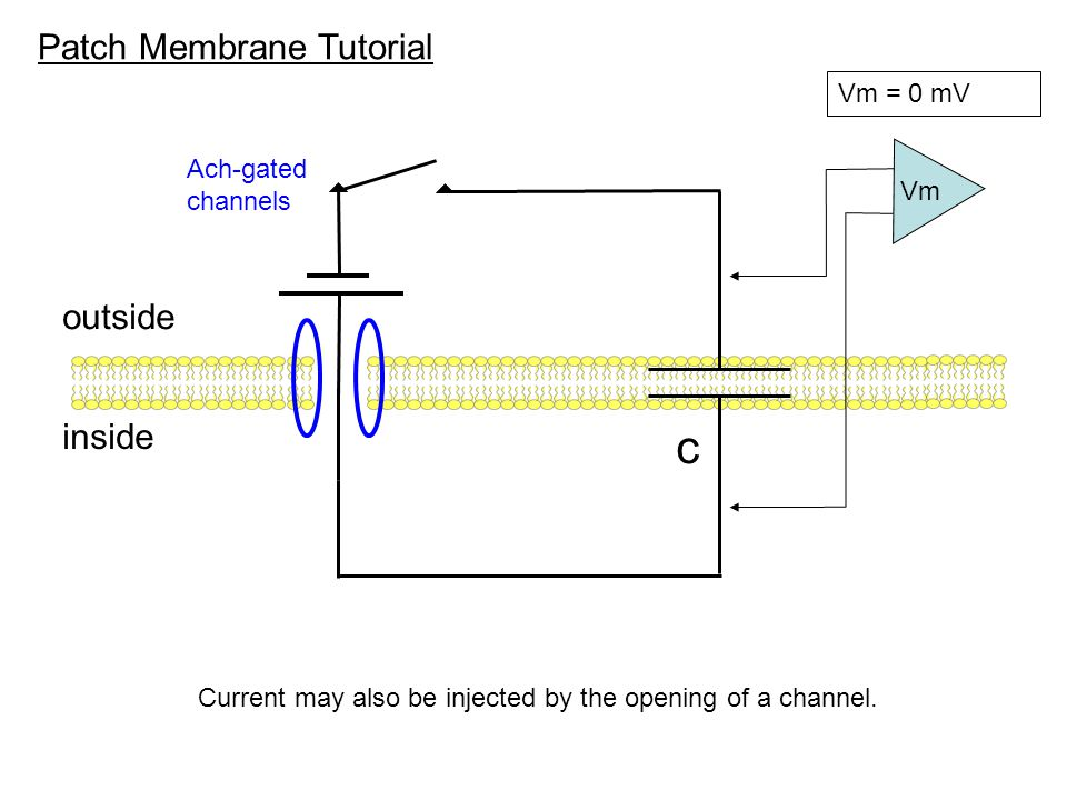 c Patch Membrane Tutorial outside inside Vm = 0 mV Ach-gated channels