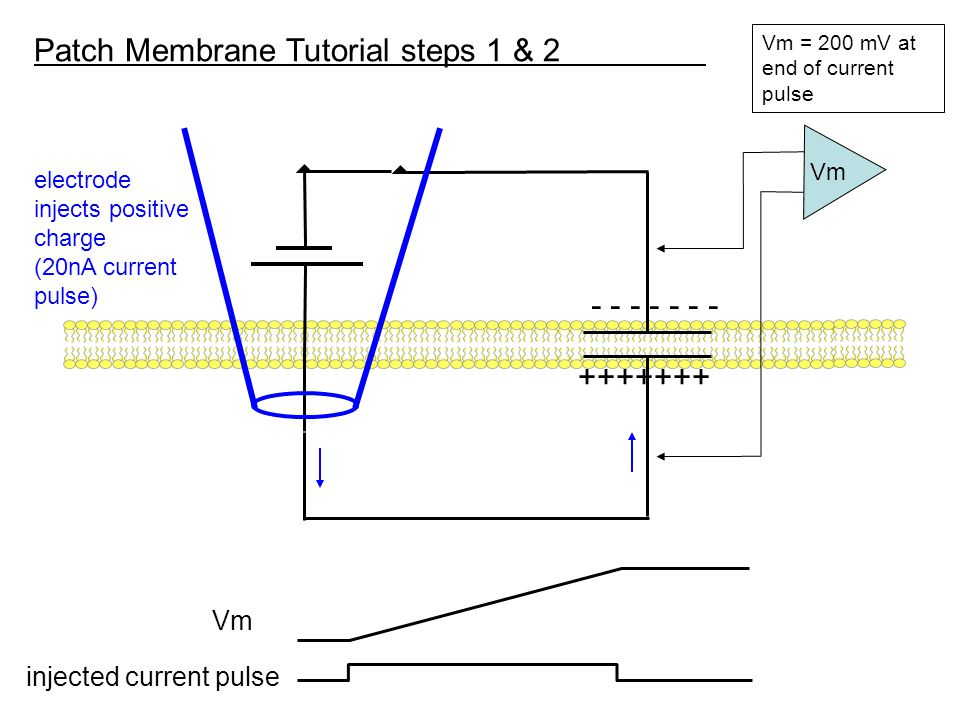 Patch Membrane Tutorial steps 1 & 2