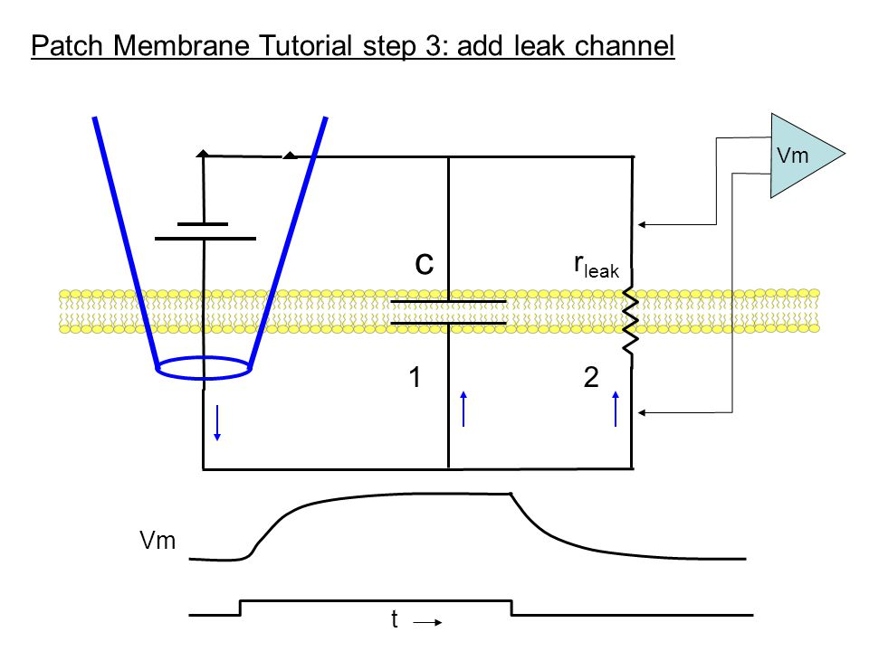Patch Membrane Tutorial step 3: add leak channel