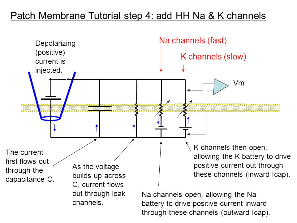 Patch Membrane Tutorial step 4: add HH Na & K channels