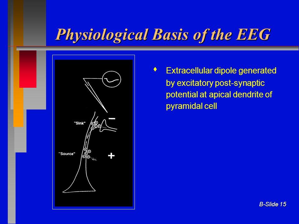 Physiological Basis of the EEG