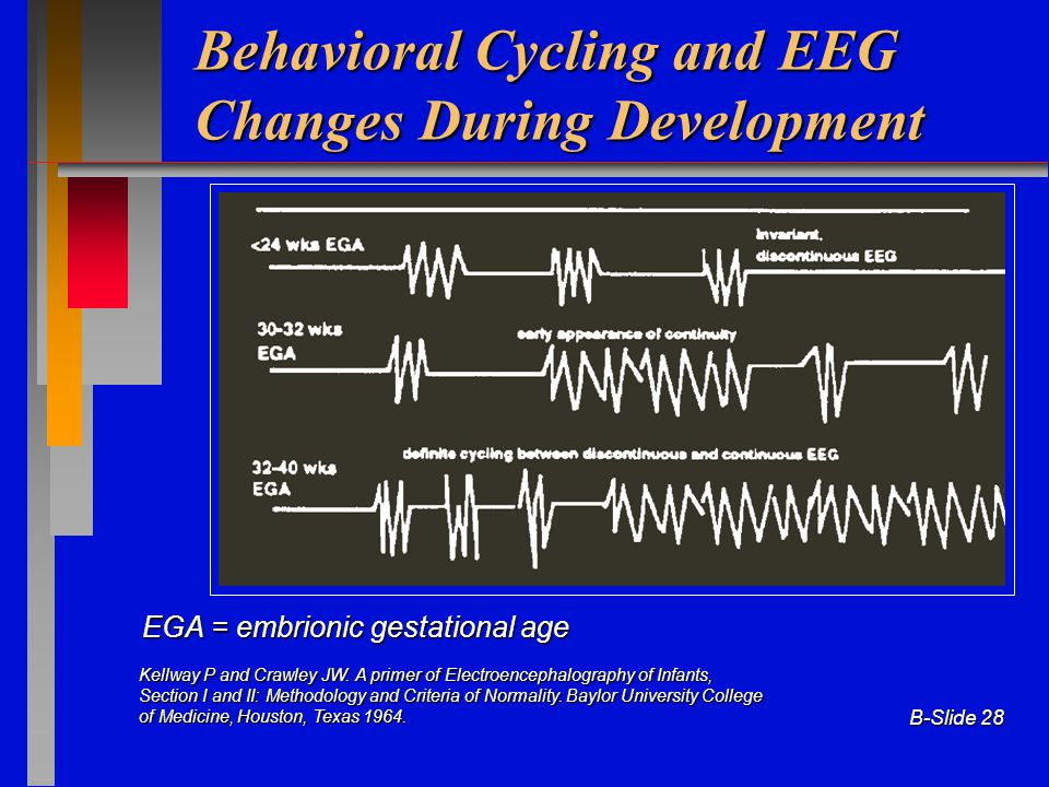 Behavioral Cycling and EEG Changes During Development