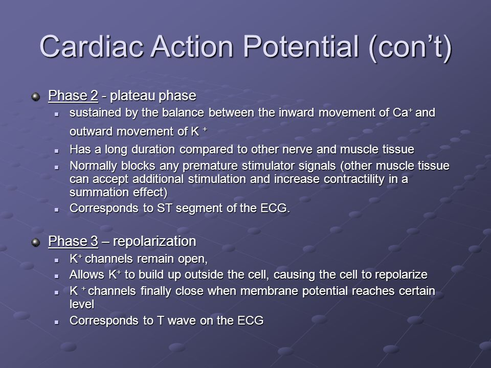 Cardiac Action Potential (con't)