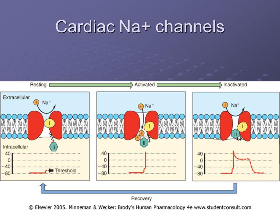 Cardiac Na+ channels