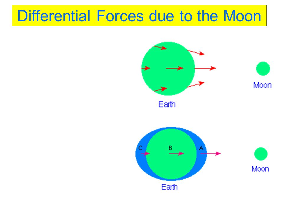 Differential Forces due to the Moon