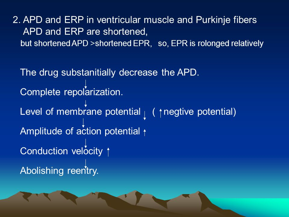 2. APD and ERP in ventricular muscle and Purkinje fibers