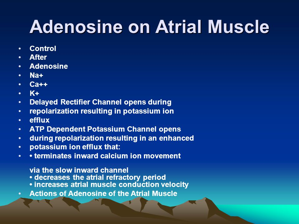 Adenosine on Atrial Muscle