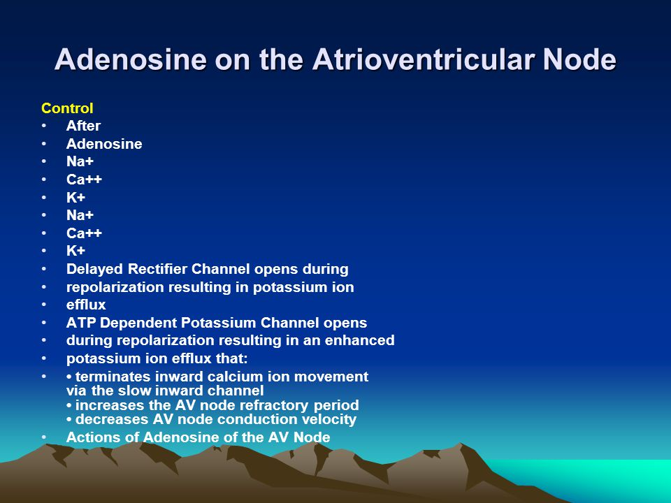 Adenosine on the Atrioventricular Node