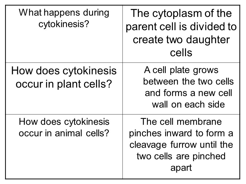 How does cytokinesis occur in plant cells