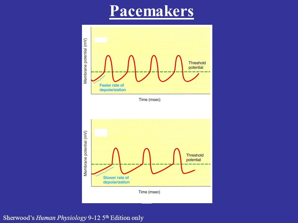 Pacemakers Sherwood's Human Physiology 9-12 5th Edition only