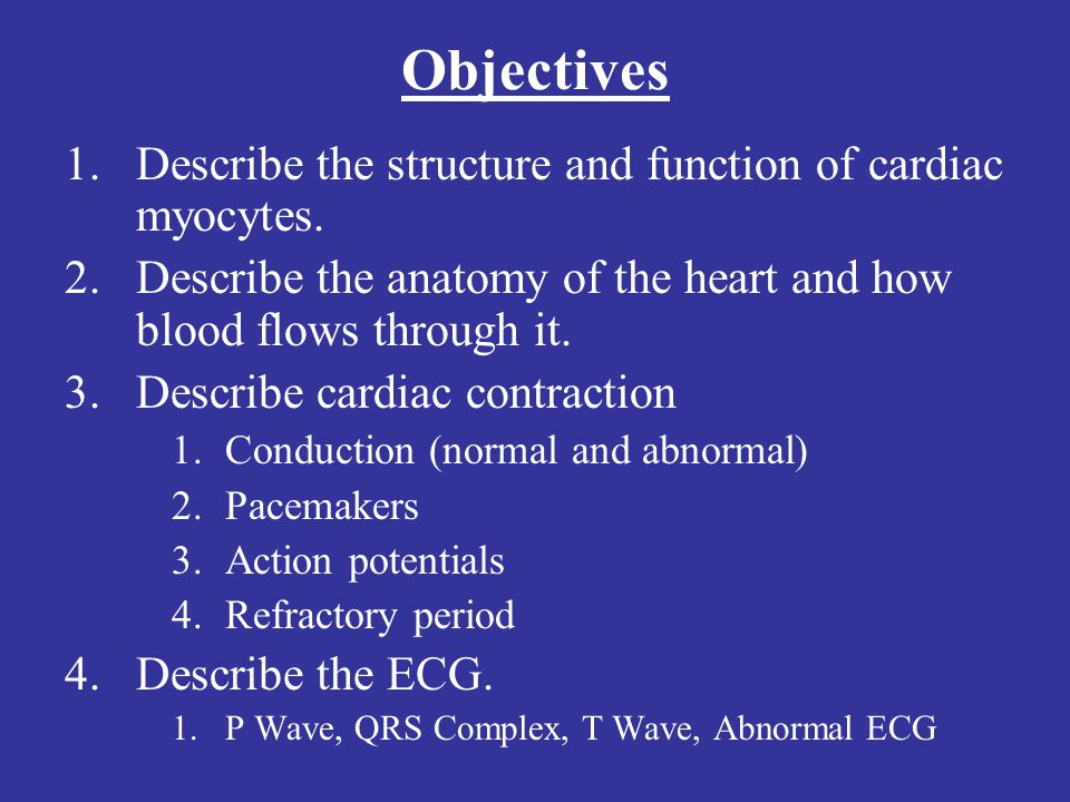 Objectives Describe the structure and function of cardiac myocytes.