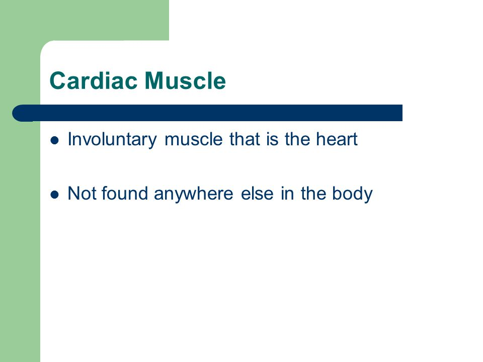 Cardiac Muscle Involuntary muscle that is the heart