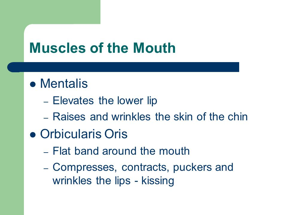 Muscles of the Mouth Mentalis Orbicularis Oris Elevates the lower lip