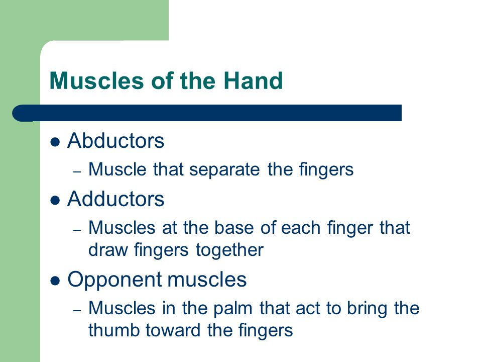 Muscles of the Hand Abductors Adductors Opponent muscles