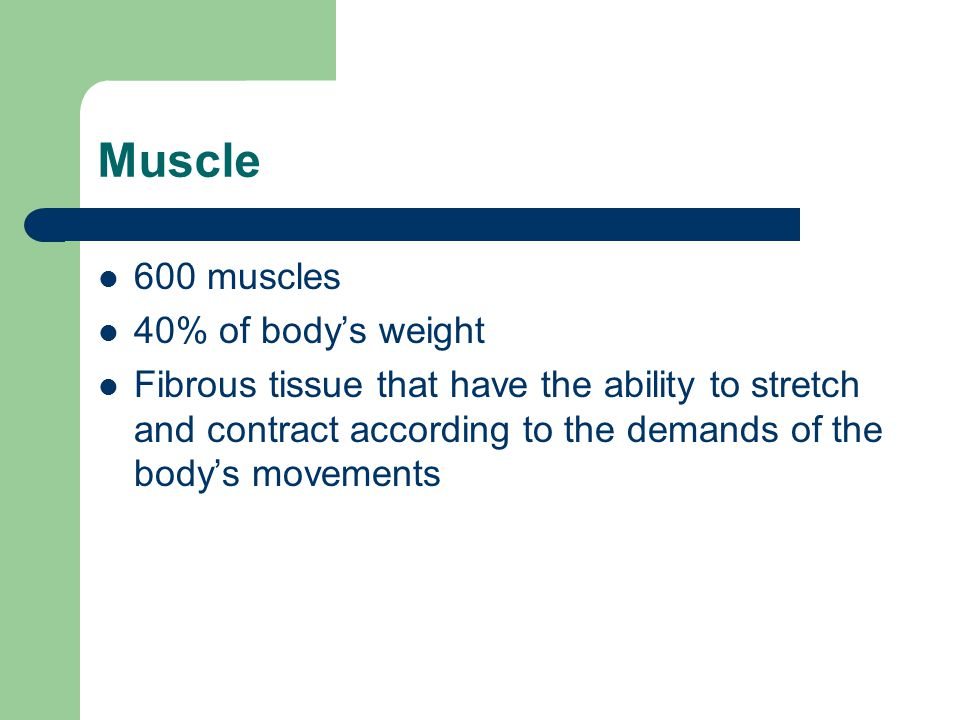Muscle 600 muscles 40% of body's weight