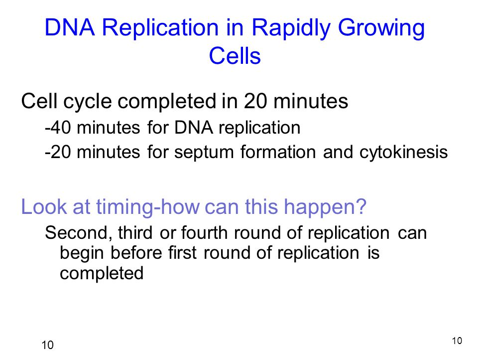 DNA Replication in Rapidly Growing Cells