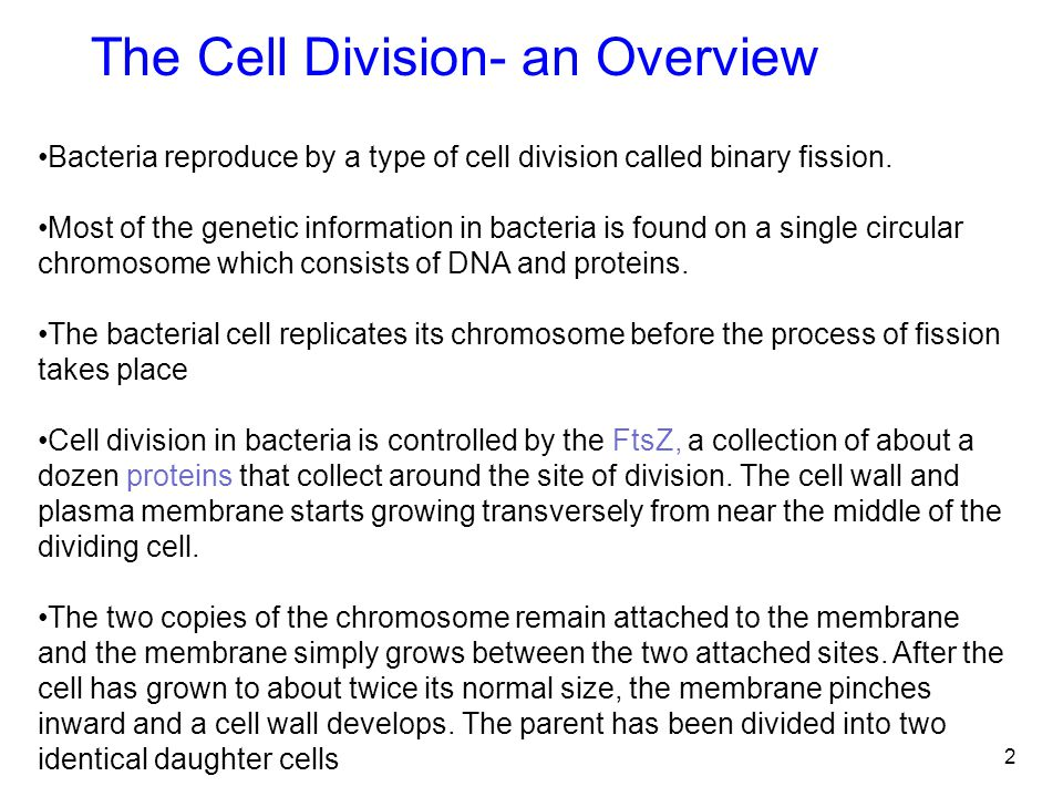 The Cell Division- an Overview