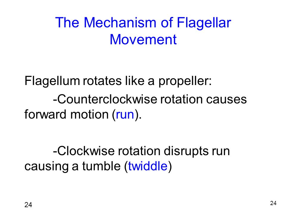 The Mechanism of Flagellar Movement