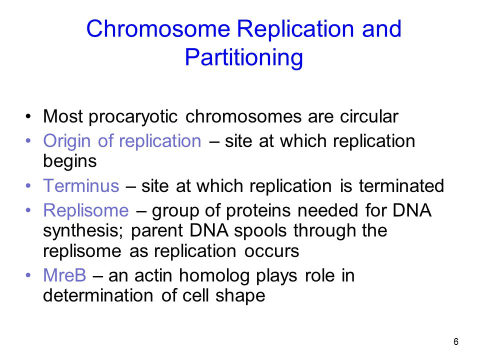Chromosome Replication and Partitioning