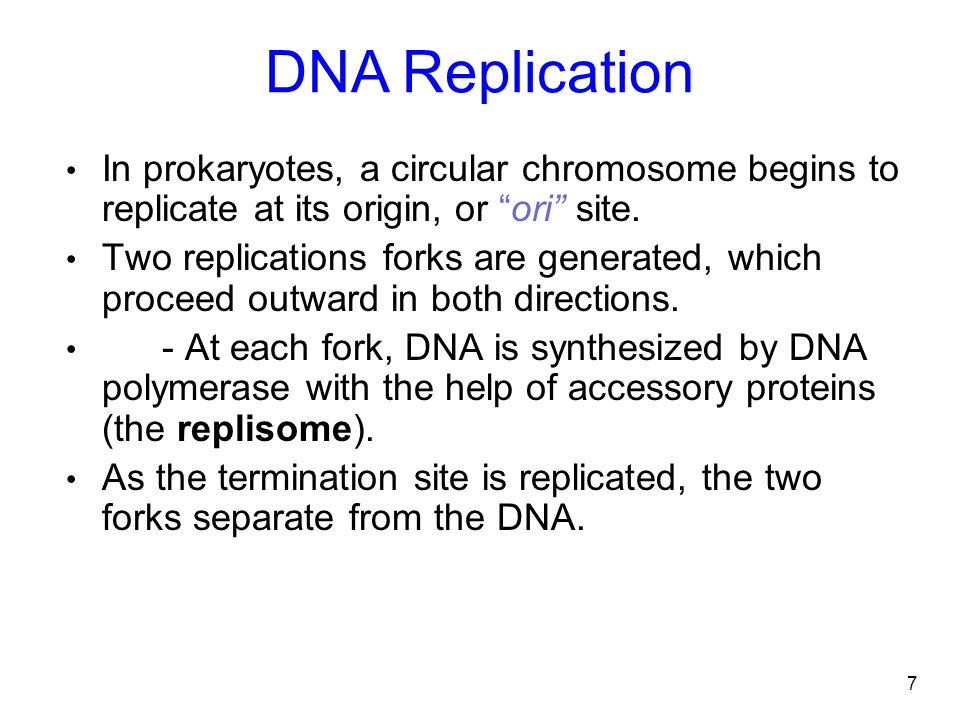 DNA Replication In prokaryotes, a circular chromosome begins to replicate at its origin, or ori site.