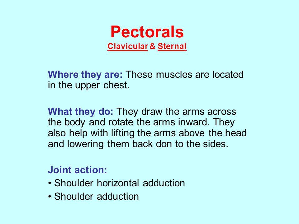 Pectorals Clavicular & Sternal