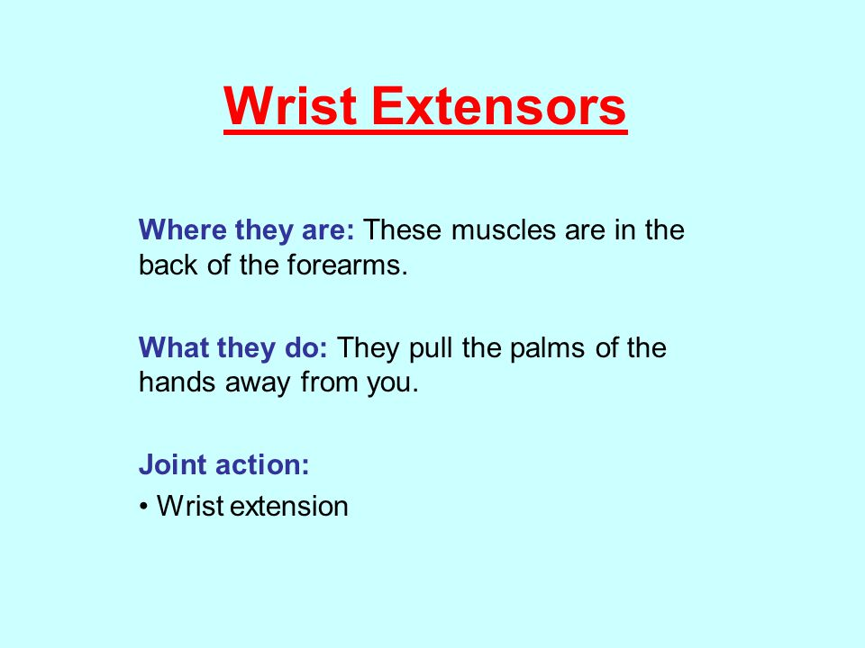 Wrist Extensors Where they are: These muscles are in the back of the forearms. What they do: They pull the palms of the hands away from you.