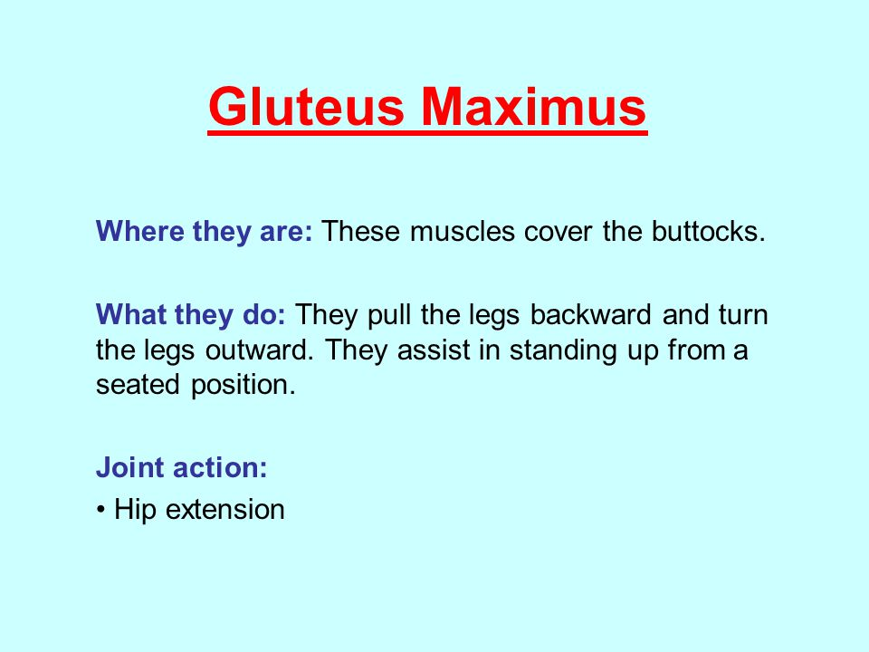 Gluteus Maximus Where they are: These muscles cover the buttocks.