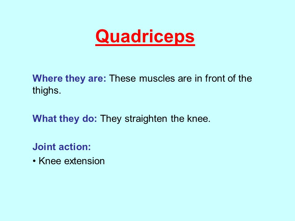 Quadriceps Where they are: These muscles are in front of the thighs.